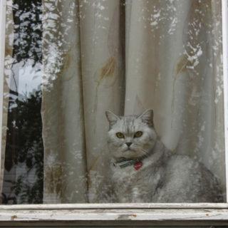 кошка на окошке