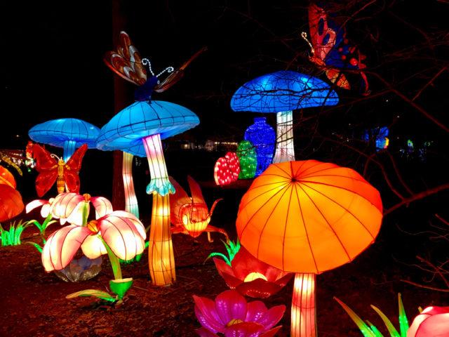 В начале экспозиции царство цветов и грибов